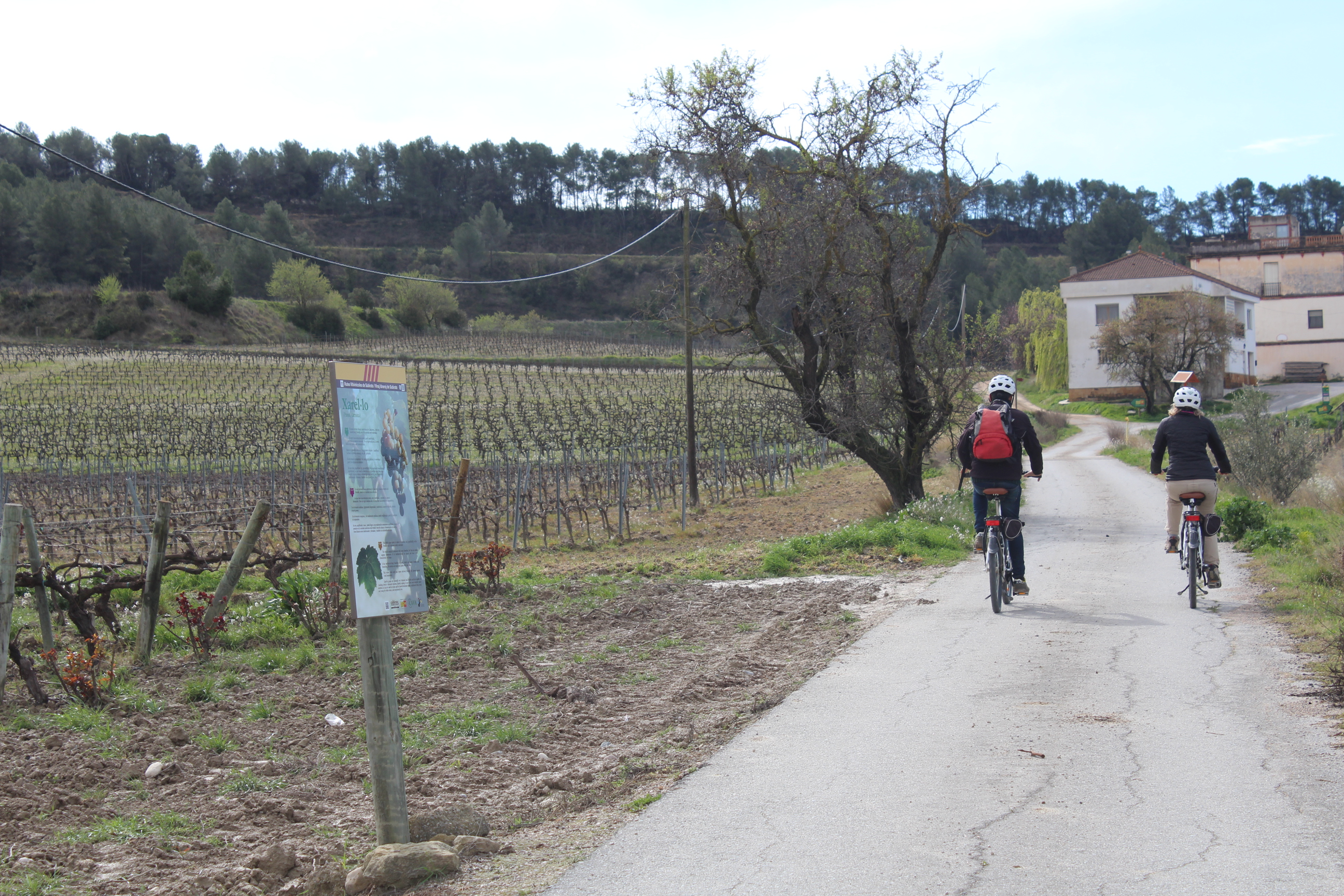 Imatge Bicicletes